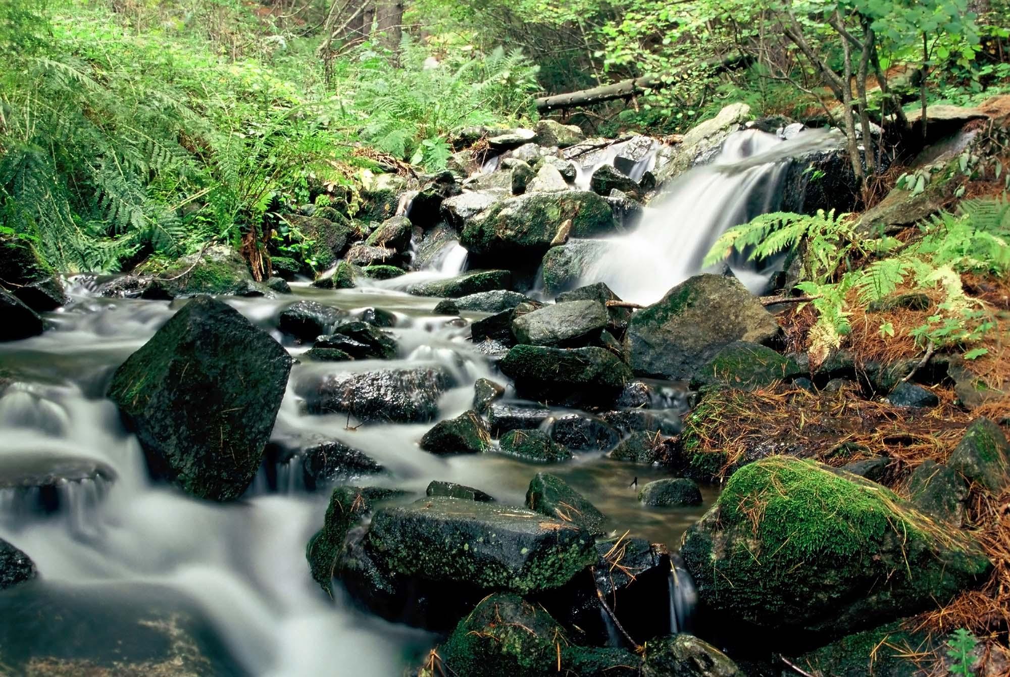 forest_slider