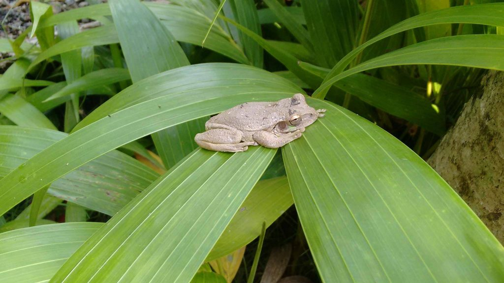 tiny frog on leaf