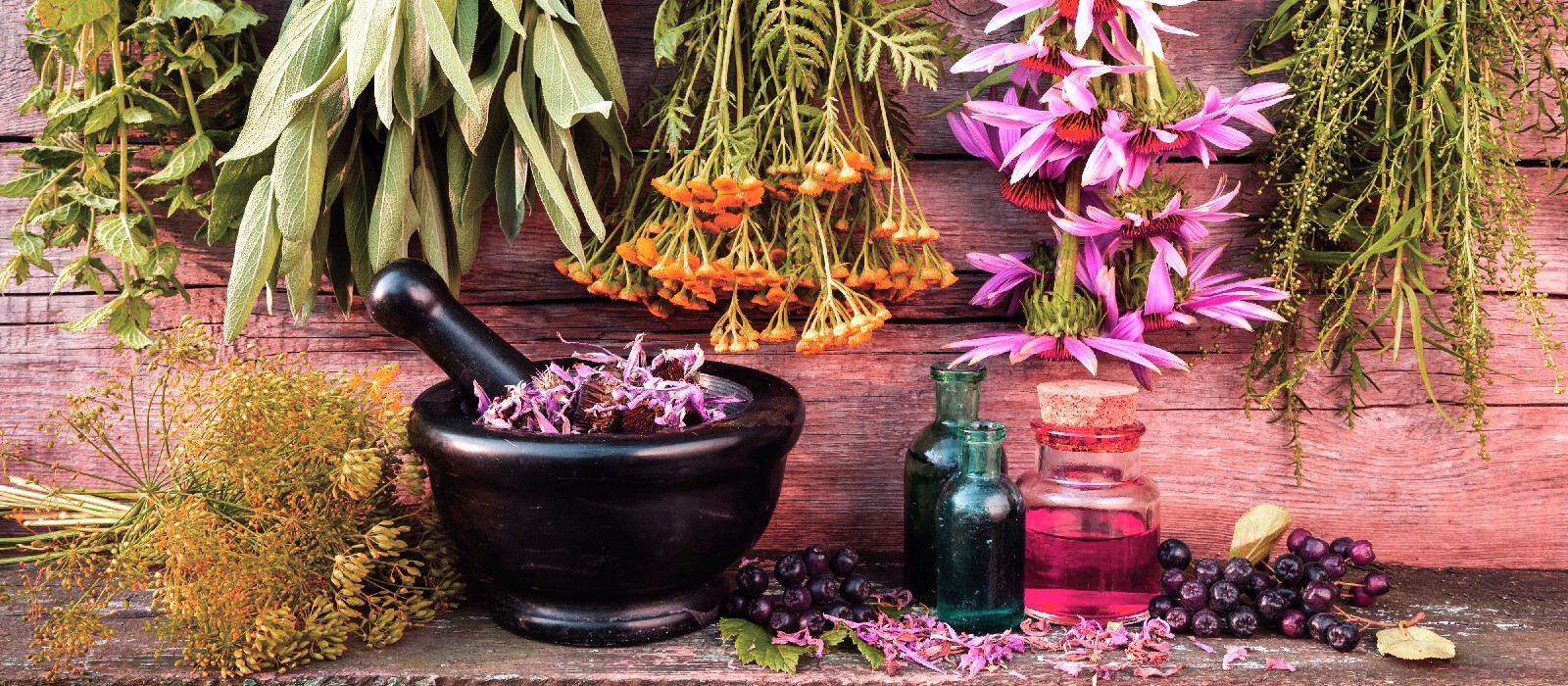 herbal medicine traditions Alquimia