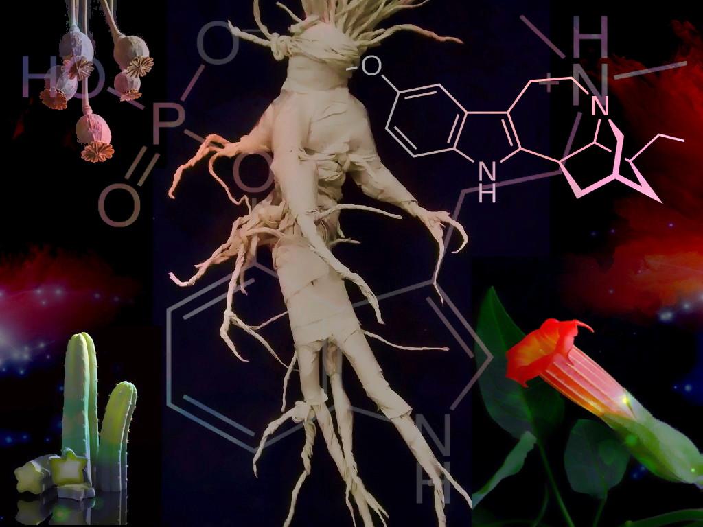 Psychotropic plants diploma Alquimia