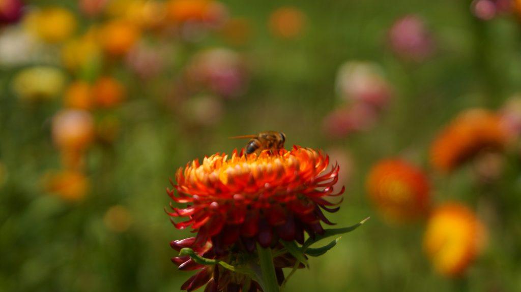 flora Alquimia