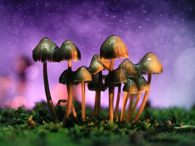 Alquimia Healing Arts mushrooms